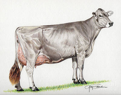 Brown Swiss Painting - Brown Swiss Cow by Gary Sauder