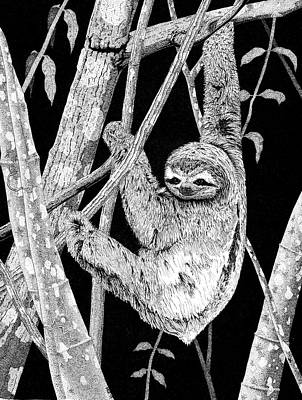 Drawing - Brown-throated Three-toed Sloth by Marcus England