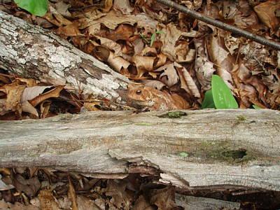 Zen - Brown Toad by Allen Nice-Webb