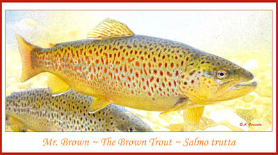 Abstract Male Faces - Brown Trout Animal Portrait by A Macarthur Gurmankin