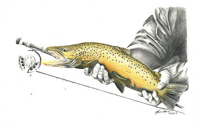 Brown Trout Drawing - Brown Trout by Benjamin Meier
