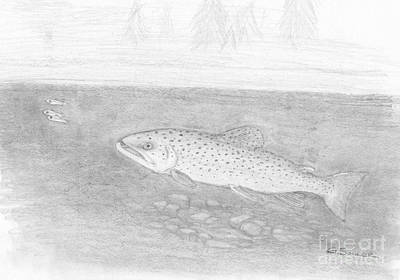 Brown Trout Drawing - Brown Trout by George Sonner