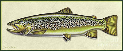 Painting - Brown Trout Id by Jon Q Wright