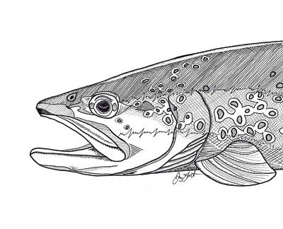 Brown Trout Drawing - Brown Trout by Jay Talbot