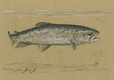 Trout Wall Art - Painting - Brown Trout by Juan Bosco