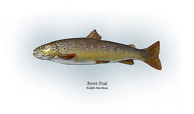 Trout Drawing - Brown Trout by Ralph Martens
