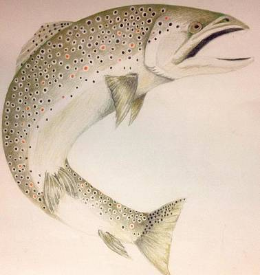 Brown Trout Drawing - Brown Trout by Tony Holm