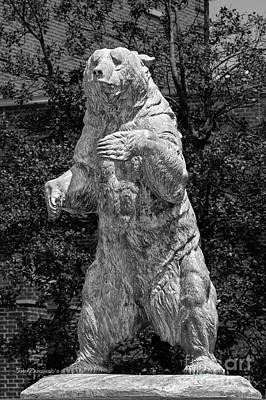 Brown University Bear Art Print