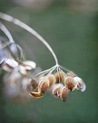 Photograph - Brown Wildflowers On Deep Peacock Green by Brooke T Ryan