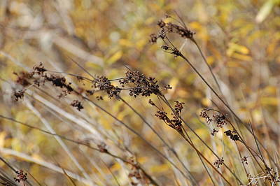 Brown Wildgrass Art Print by Jean Booth