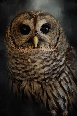 Photograph - Brownsville Barred Owl  by Jai Johnson