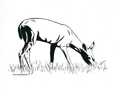 Drawing - Browsing Doe by Timothy Livingston