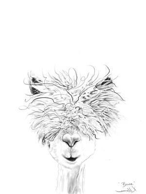 Animals Drawings - Bruce by K Llamas