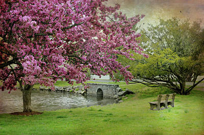Photograph - Bruce Park Cherry Blossoms by Diana Angstadt