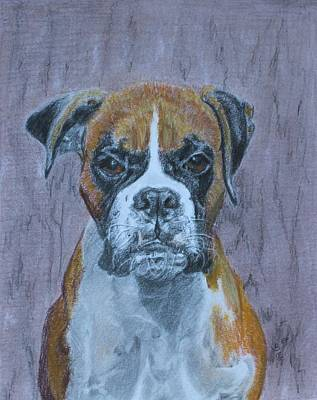 Drawing - Bruce by Vera Smith