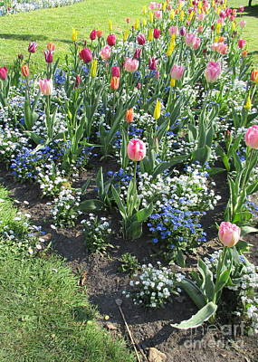 Photograph - Bruges Tulips 1 by Randall Weidner