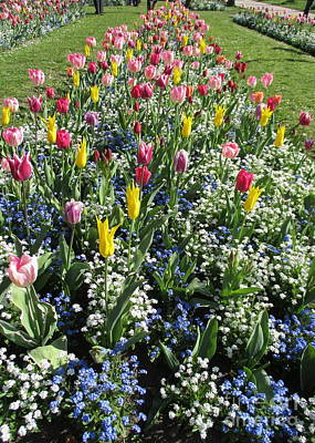 Photograph - Bruges Tulips 2 by Randall Weidner
