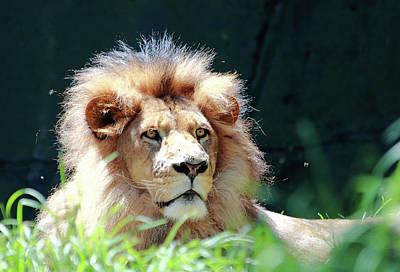 Photograph - Bruiser The King by Miroslava Jurcik