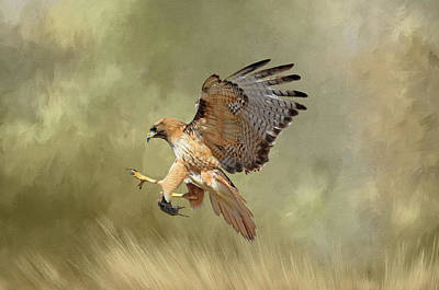 Red Tail Hawk Wall Art - Photograph - Brunch by Donna Kennedy