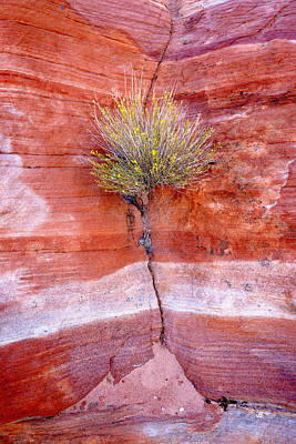 Photograph - Brush And Sandstone by Joe Doherty