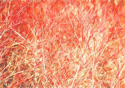 Photograph - Brush Fire by Barbara McMahon
