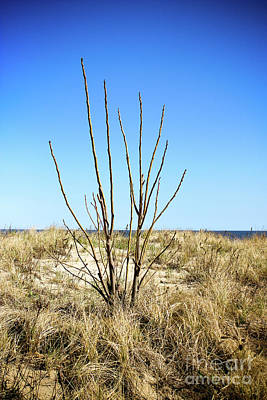 Photograph - Brush On The Dunes by Colleen Kammerer