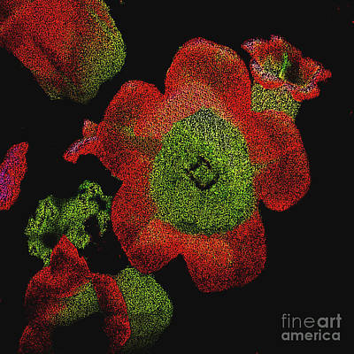Photograph - Brush-painted Digitally Pointilized Red Flowers by Merton Allen