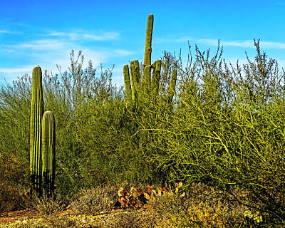 Photograph - Brush With Saguaros H1814 by Mark Myhaver
