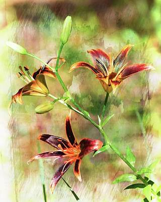 Photograph - Brushed Maroon Lilies  by Sheri McLeroy