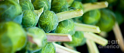 Photograph - Brussels Sprouts On The Stalk Panorama by Patricia Bainter