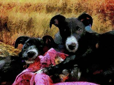 Photograph - Bruvvers by Dorothy Berry-Lound