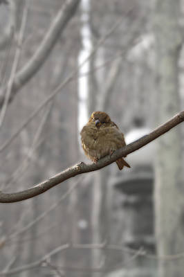 Photograph - Bryant Park Bird Nyc by Henri Irizarri