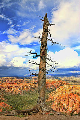 Photograph - Bryce Canyon 10 - Bryce Point by Allen Beatty