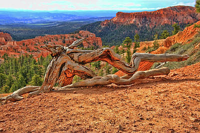 Photograph - Bryce Canyon 45 - Sunrise Point by Allen Beatty