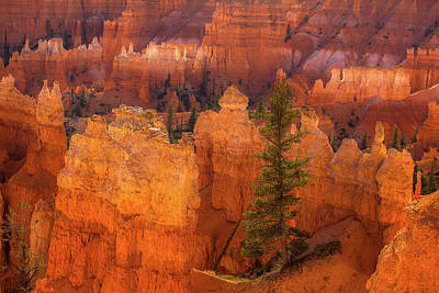 Photograph - Bryce Canyon And Tree by Jay Moore