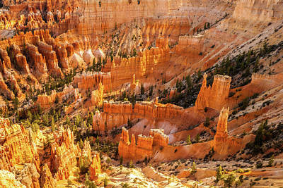 Photograph - Bryce Canyon by Constance Reid