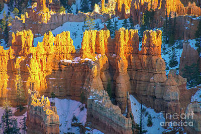 Polaroid Camera - Bryce Canyon Golden Columns of Light by Mike Reid