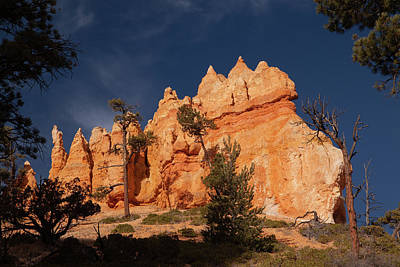 Photograph - Bryce Canyon Hoodoos  by Alan Vance Ley