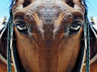 Photograph - Bryce Canyon Horse Mirror by Kyle Hanson