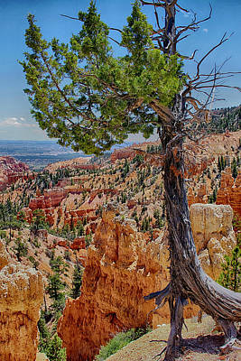 Photograph - Bryce Canyon by Jim Pavelle