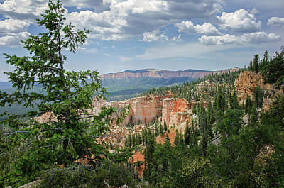 Photograph - Bryce Canyon National Park 7 by Susan McMenamin
