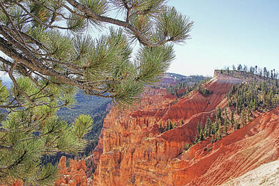 Photograph - Bryce Canyon National Park Pinyon Pine by Jennie Marie Schell