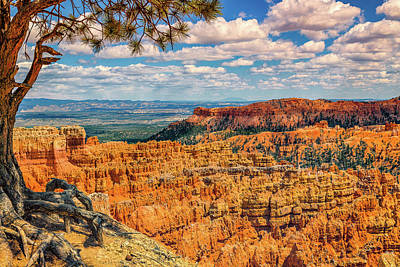 Photograph - Bryce Canyon Overlook by David Cote