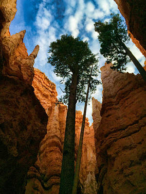Photograph - Bryce Canyon Perspective by Robert Meyers-Lussier