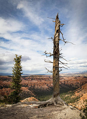 Photograph - Bryce Canyon Point Trees by Kathleen Scanlan