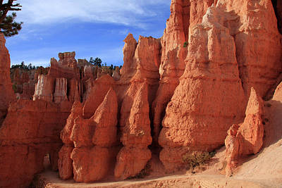 Photograph - Bryce Canyon Red Rock Formations by Aidan Moran