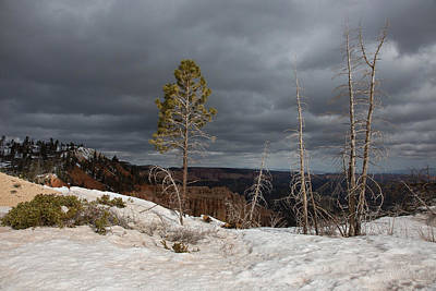 Linda King Photograph - Bryce Canyon Snow Storm 2242 by Linda King