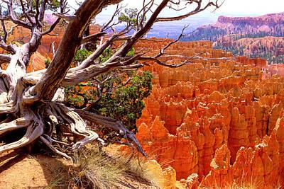 Bryce Canyon Thru Pine Original by Alan Lenk