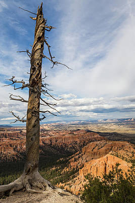 Photograph - Bryce Canyon Tree by Kathleen Scanlan