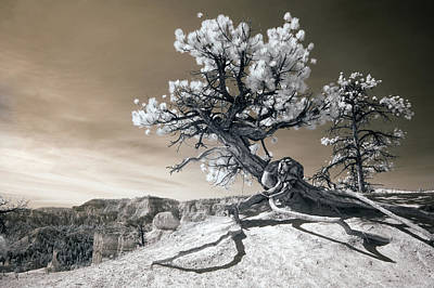 Clouds Photograph - Bryce Canyon Tree Sculpture by Mike Irwin